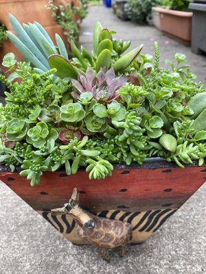 Succulents plants arrangement in its own containers. for Sale in Gresham, OR