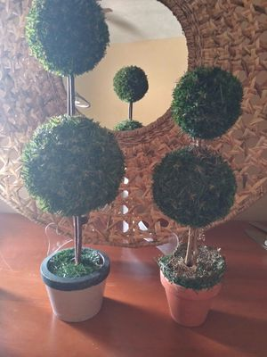 2 potted topiary small suzes for Sale in Orlando, FL