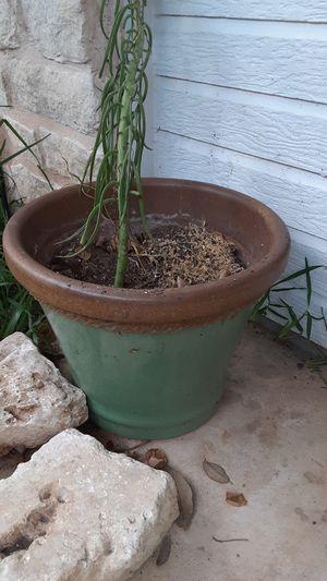 Succulent in Green Pot for Sale in Austin, TX