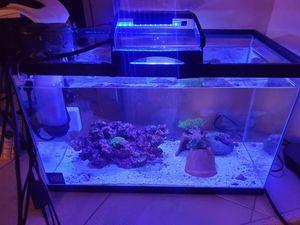 10 GL saltwater aquarium. for Sale in Long Beach, CA