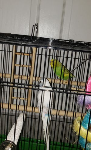 2 Birds with Cage for Sale in Greenville, NC