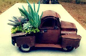 Succulent Arrangement for Sale in Willis, TX