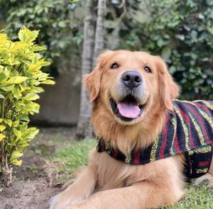 Bob Marley handcrafted poncho / halloween dog custome for Sale in Miami, FL