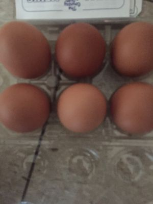 fresh chicken eggs for sale for Sale in McLean, VA