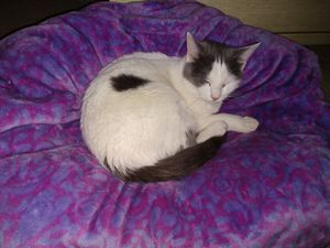 Cats Need A Home! for Sale in Kingsport, TN
