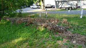 Free firewood for camping! You cut and remove! for Sale in Shippensburg, PA