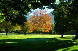Holladay memorial single plot for Sale in South Salt Lake, UT