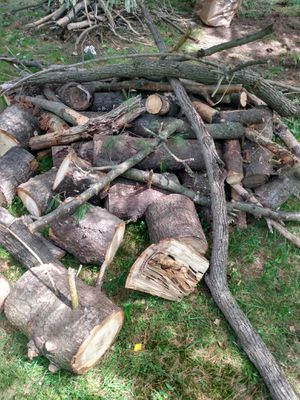 Free firewood for Sale in Redford Charter Township, MI