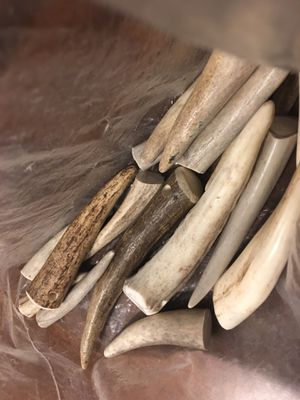 Antlers for Sale in Federal Way, WA