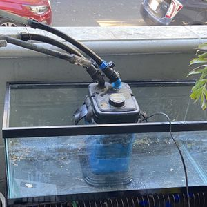 20 Gallon Tank with canister Filter for Sale in Long Beach, CA