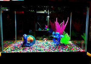 Fish Tank Bundle for Sale in Houston, TX