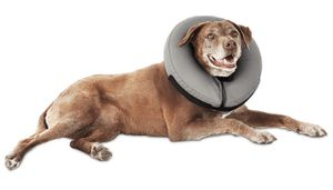 Well & Good Inflatable Collar for Dogs and Cats, Medium for Sale in La Verne, CA