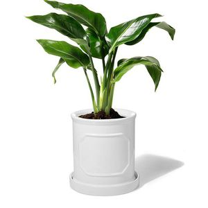 POTEY 050201 Ceramic Pots for Plants - 6.2 inch Cylinder Flower Planters Bonsai Container with Drainage Hole & Saucer for Indoor Plants Flower Aloe Mo for Sale in Henderson, NV