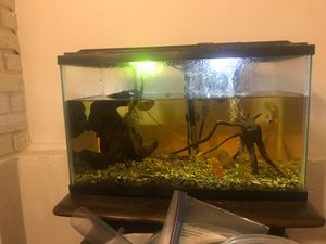 Fish tank 30 Gallon (1 loach) for Sale in Cleveland, OH