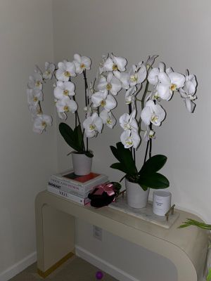 4 white orchids. REAL for Sale in Los Angeles, CA