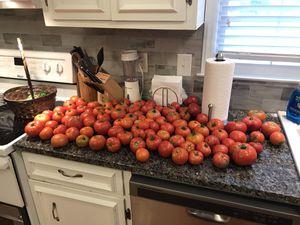 Fresh Organic Tomatoes for Sale in Charlotte, NC