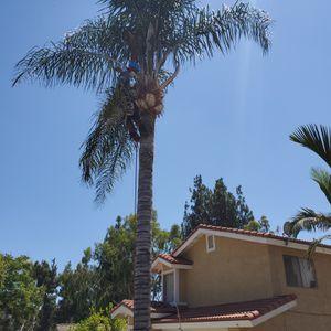 Trees Treme Removed for Sale in Pomona, CA