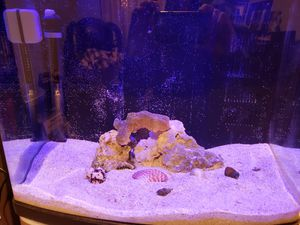 All in one 24g nano tank for Sale in Wood Village, OR