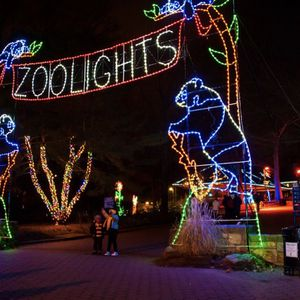 Zoo Light Tickets for Sale in Chandler, AZ