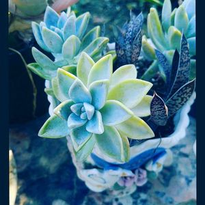 10 Plant cuttings for $12 for Sale in Corona, CA