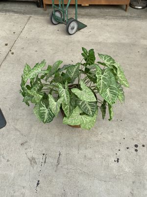 Fake plant for Sale in Bakersfield, CA