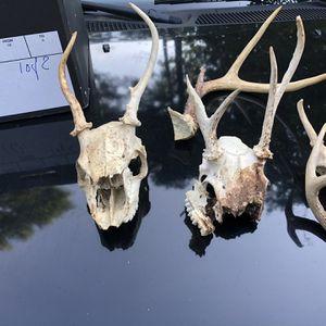 Animal Skulls A Box Of Skulls For Sale for Sale in Douglasville, GA