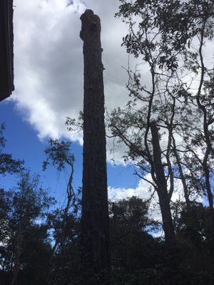 Free pine logs 25 feet tall for Sale in Inverness, FL