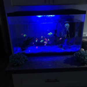 Fish Tank 20 Gallons for Sale in Santee, CA