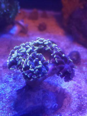 Saltwater aquarium for Sale in Tacoma, WA