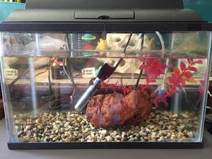 "Fish Tank 16"" L x 10"" H x 8"" D for Sale in Arcadia, CA"