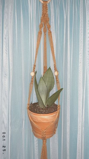 Plant Hanger for Sale in Milpitas, CA