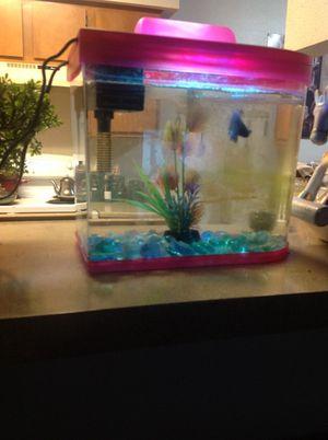 Betta fish tank for Sale in Holladay, UT