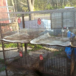 USDA a proved rabbit cage, feeder, breading box, nesting box, pellets feeder. for Sale in Menomonie, WI