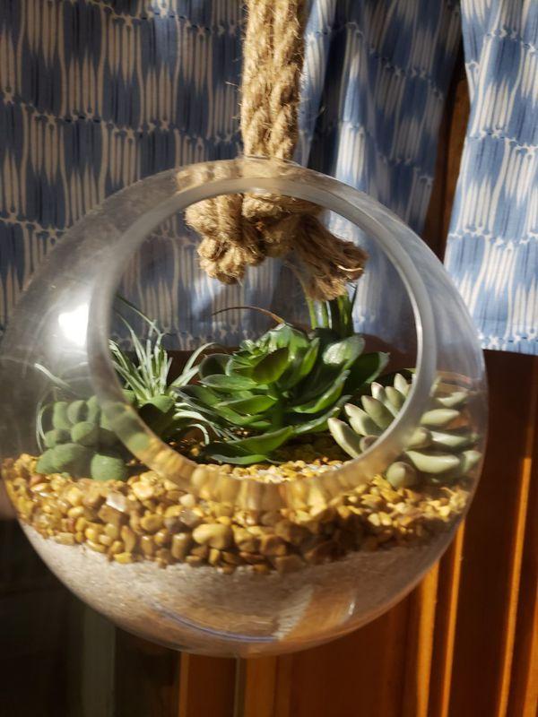 Hanging succulent garden