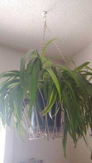 Plants for Sale in Colorado Springs, CO