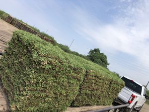 Grass pallets (Free Delivery) for Sale in Richmond, TX