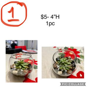 Succulent Arrangement - Great for Christmas Gift. for Sale in Norfolk, VA