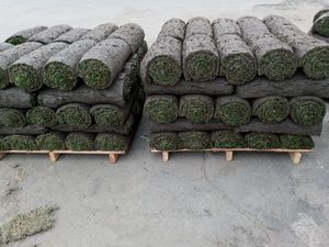 Fresh Sod Cut Daily Every Morning for Sale in Escondido, CA