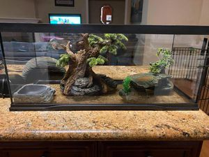 BEARDED DRAGON EXHIBIT AND ALL ACCESSORIES INCLUDED for Sale in Spring, TX