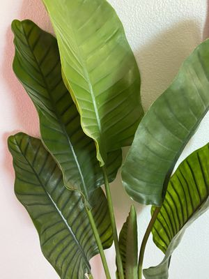 Indoor plant for Sale in Tracy, CA
