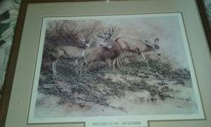 Western slope mule deer for Sale in Lakeside, AZ