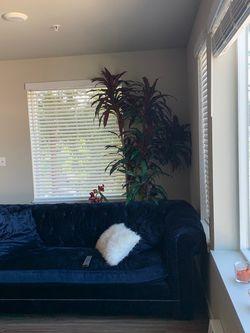 Blue velvet chesterfield couch for Sale in Mountlake Terrace,  WA