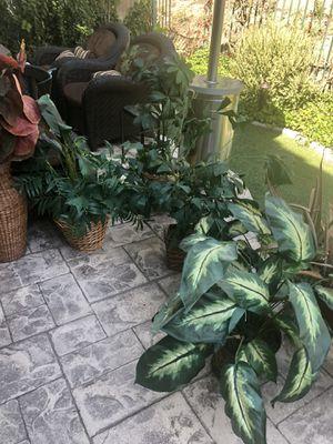 Fake plants for Sale in Rancho Santa Margarita, CA