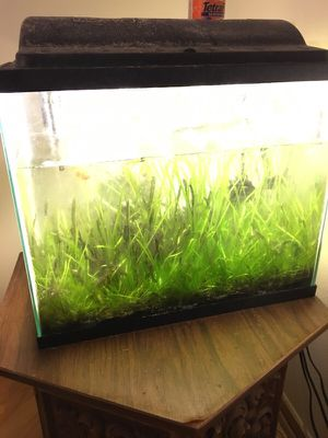Fully operational and cycled fish tank for Sale in Chicago, IL