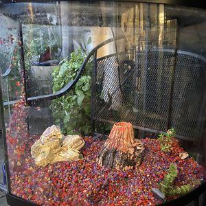 30 Gallon Fish Tank for Sale in Whittier, CA