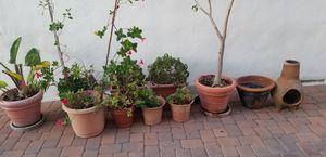 Free plant pots for Sale in Redondo Beach, CA
