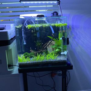 "16""x16"" Amazing 17 Gallon With Built In Filter Fish Tank for Sale in Los Angeles, CA"