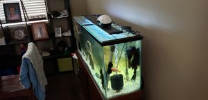 55 gallon fish tank comes with everything to sponge filters rock decorations Fish make me an offer for Sale in Las Vegas, NV