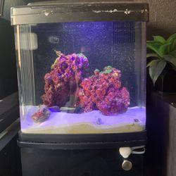 Saltwater Fish Tank for Sale in Turlock,  CA