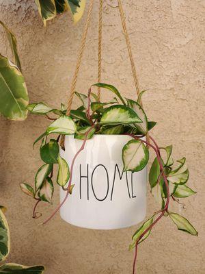 Hanging Hoya Carnosa Krimson Princess Plant for Sale in Westminster, CA